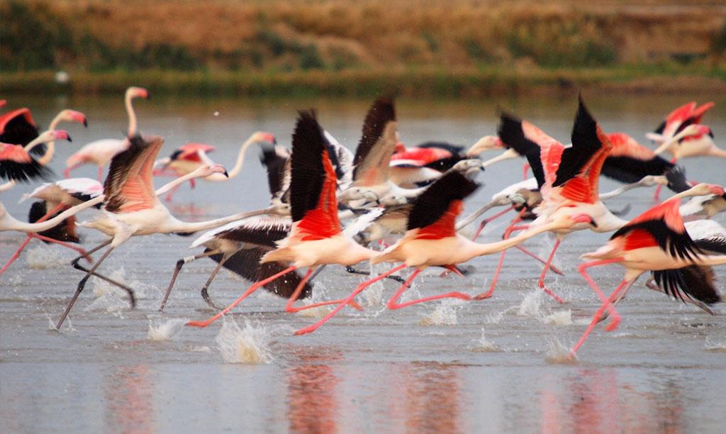 Delta de l'Ebre avistament d'ocells pajaros